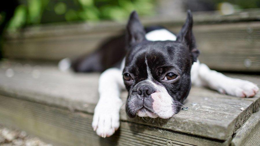 Породы собак для детей: список пород с фото и описанием | 506x900