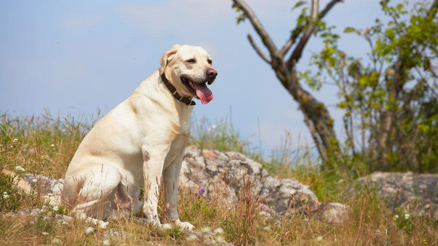 Картинки dog
