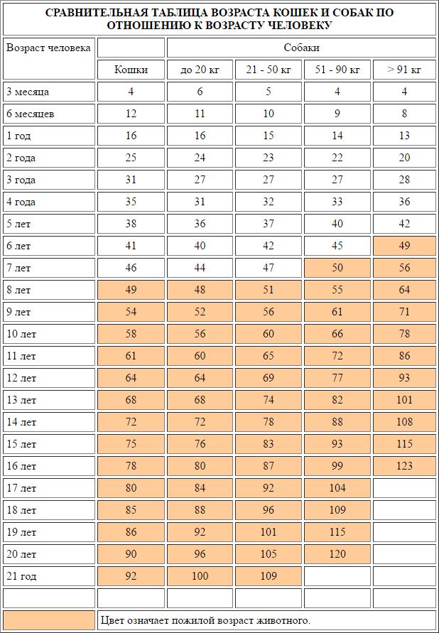Сравнительная таблица возраста кошек и собак по человеческим меркам