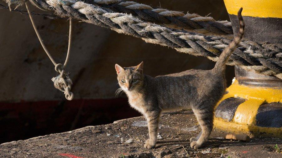 Определяем поведение кошки по хвосту