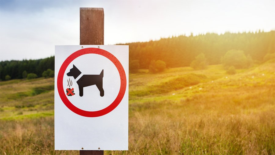 Собака ест кал
