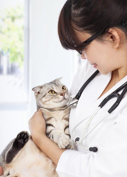 Цистит у кошек - виды заболевания, причины и профилактика