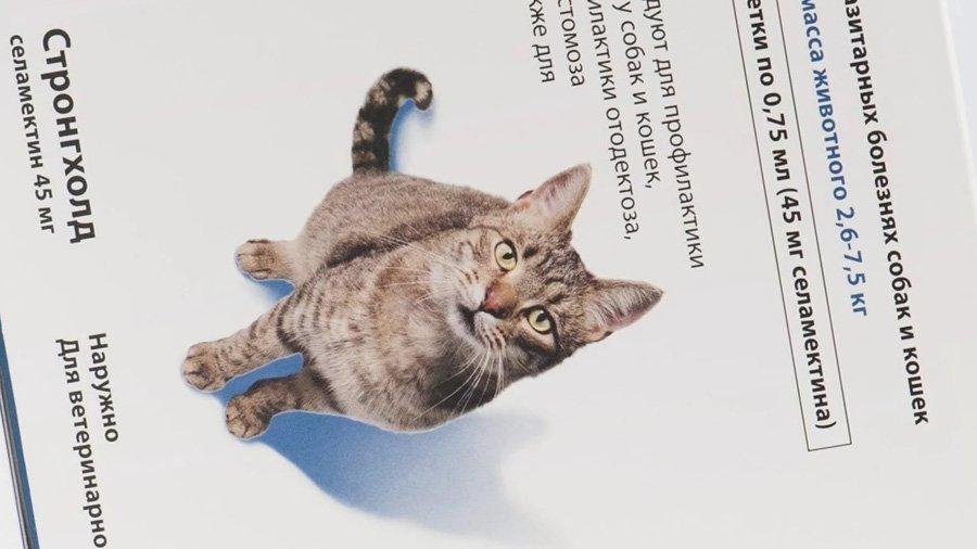 Стронгхолд для кошек как действует