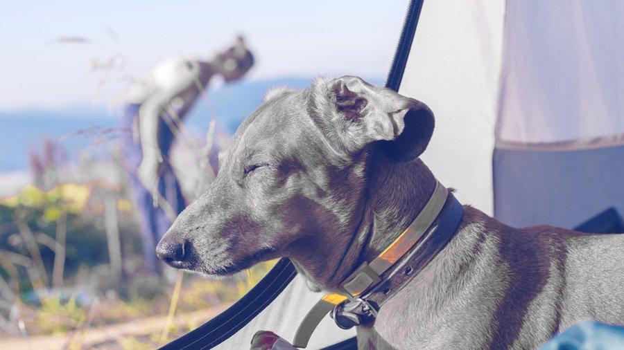 Пример фото как видит собака цвета