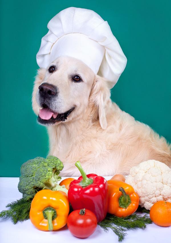 Овощи давать собакам