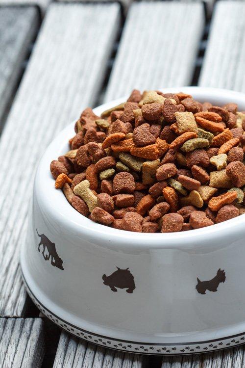 Почему собака ест кошачий корм, можно ли его давать собакам?