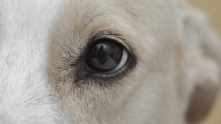 Здоровье, болезни и лечение собак