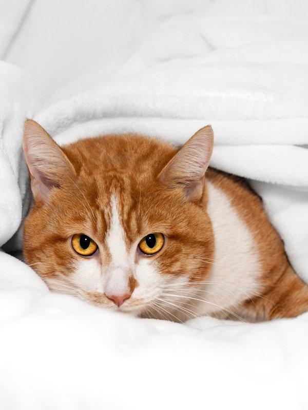 Конъюнктивит у кошки виды причины появления лечение