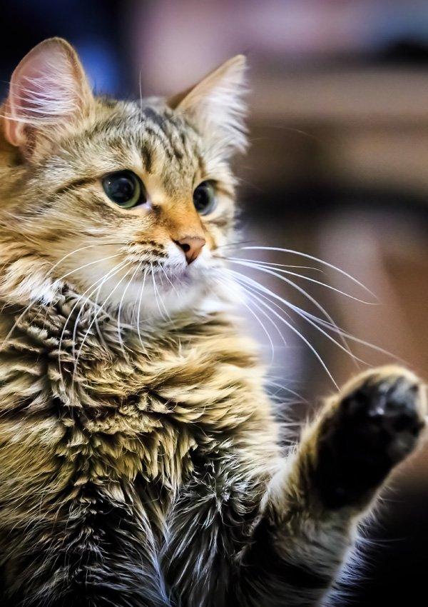 Почему кошка кусается за ноги