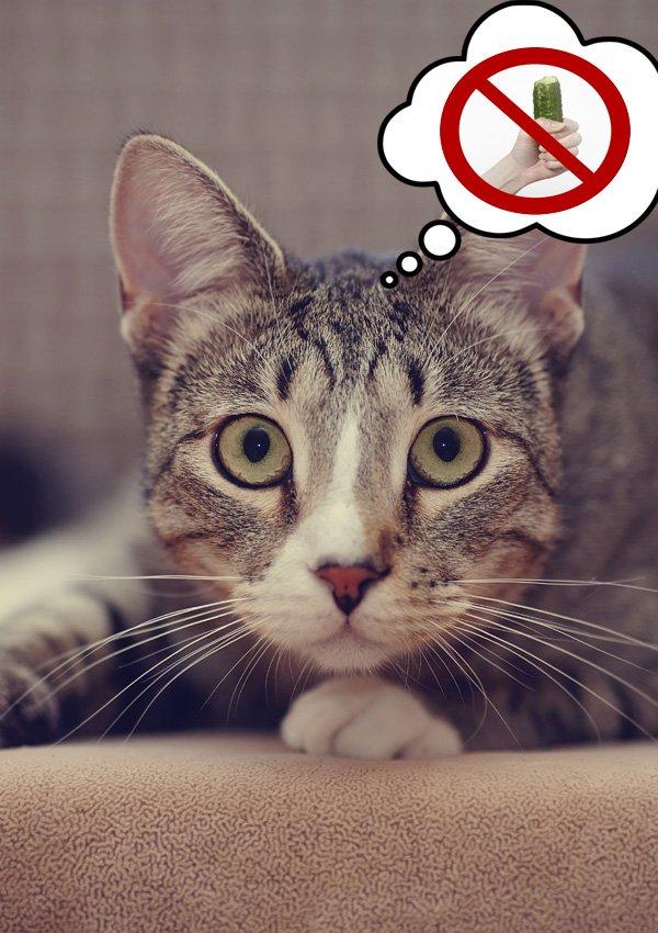Почему коты боятся огурцов? Изучаем кошачью вековую тайну