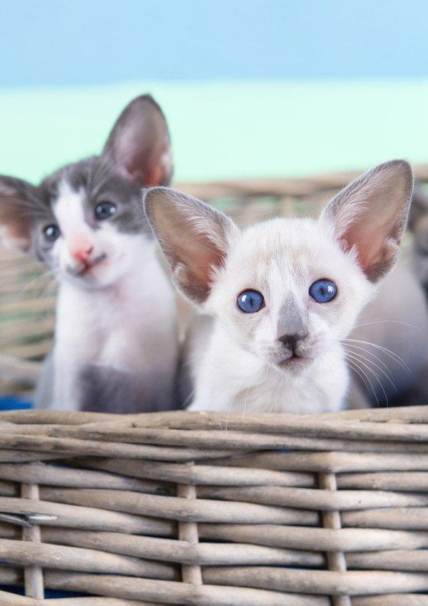 Почему дрожит кот - причины и нужно ли беспокоиться