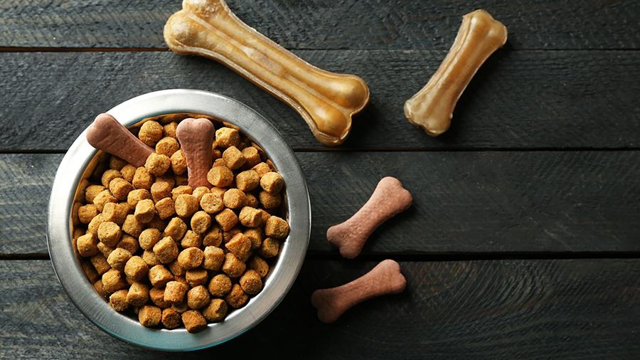 Узнаем, как кормить собаку в зимний период времени