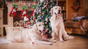 Собака породы Золотистый ретривер фото 4