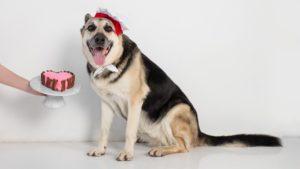 Собака породы Восточно-европейская овчарка фото 6