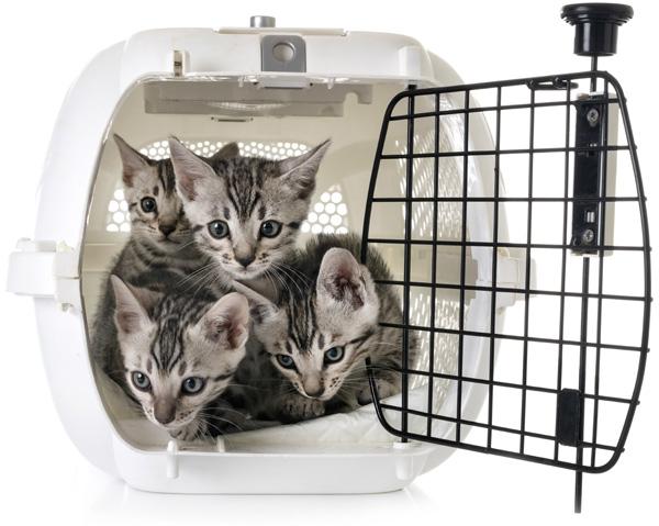 Контейнер для перевозки кошек