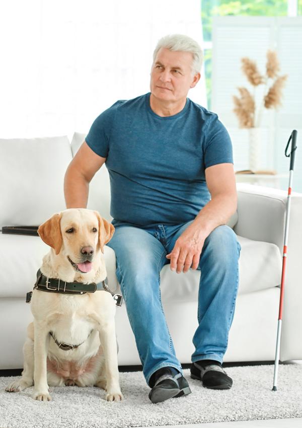 Собака-поводырь породы лабрадор-ретривер