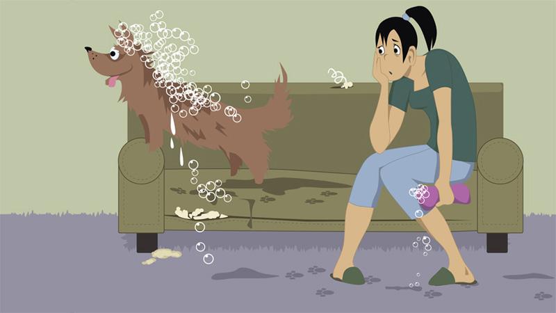 Неприятный запах от собаки