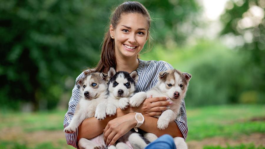 Девушка и щенки хаски