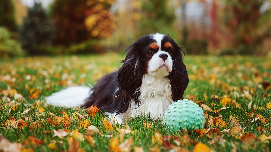 Как научить собаку приносить. Научить собаку команде «Апорт»