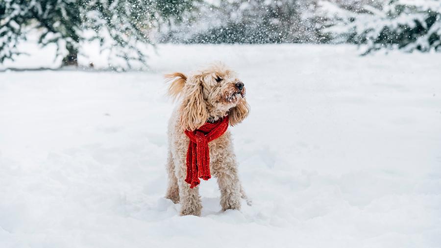 Как правильно кормить собаку зимой