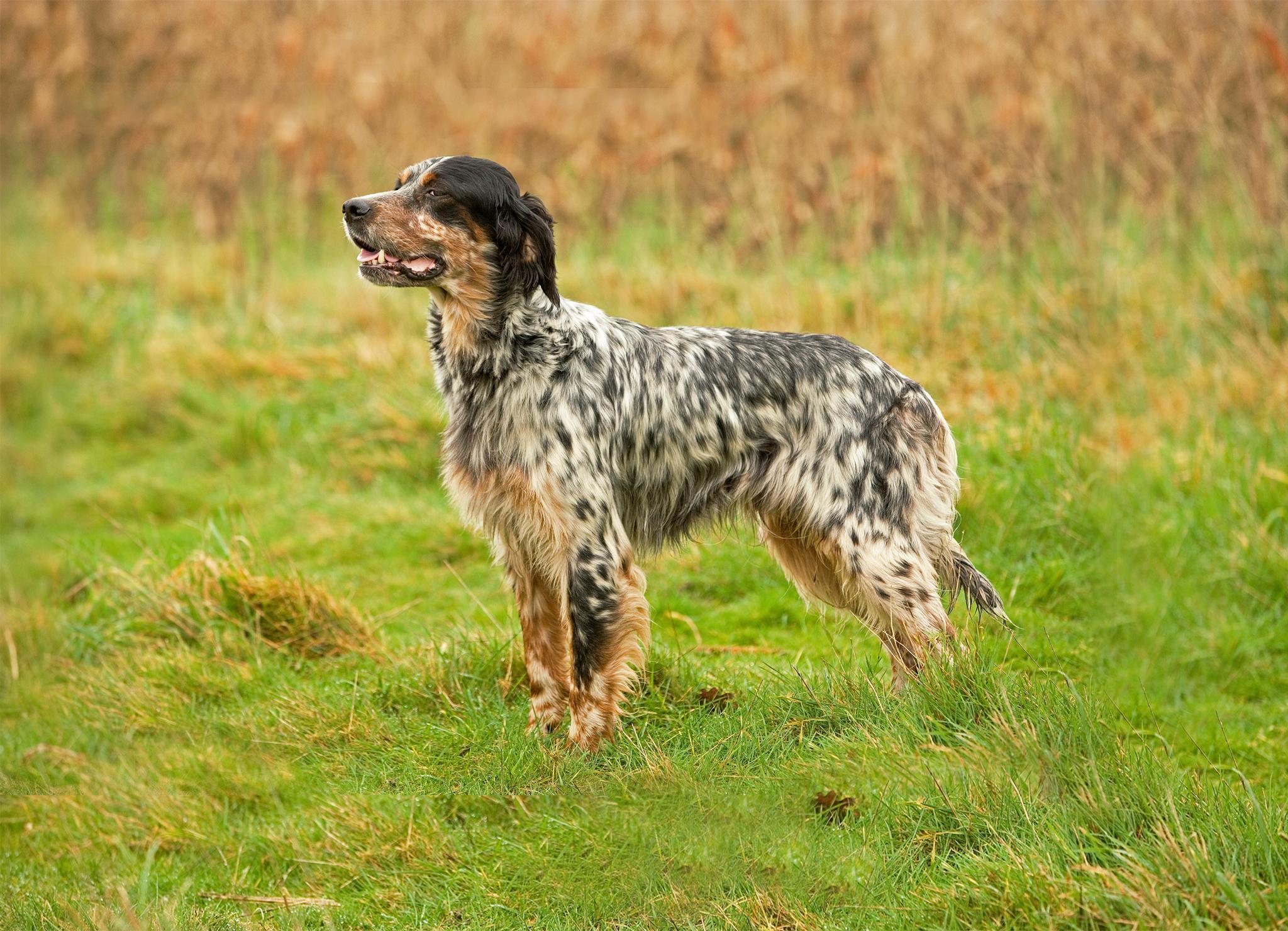 Остеоартрит у собак: признаки и лечение