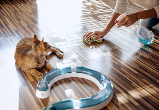 Почему ваш кот метит и как его отучить: советы ветеринара