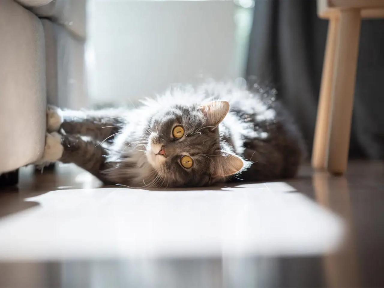 7 важных нюансов, которые стоит знать всем, если в доме кошка