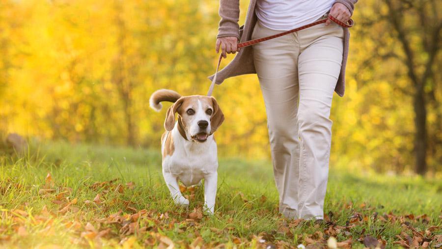 Негласные правила выгула собак
