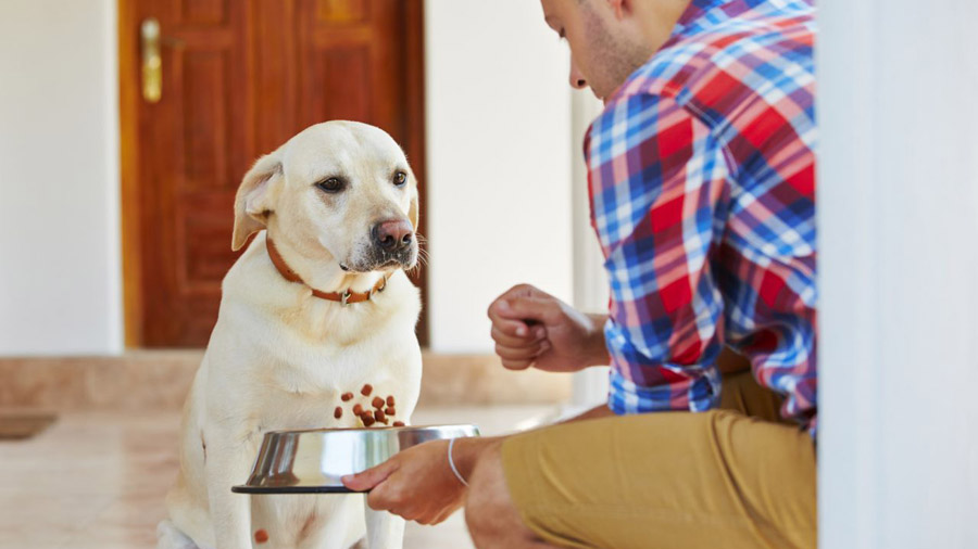 Если собака не ест и похудела