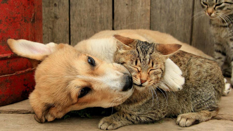 Рот кота и собаки