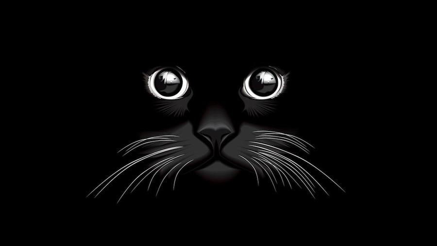 когда снятся кошки