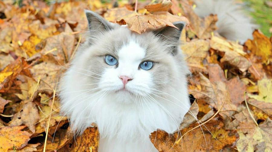 Чем лечить тошноту у кота