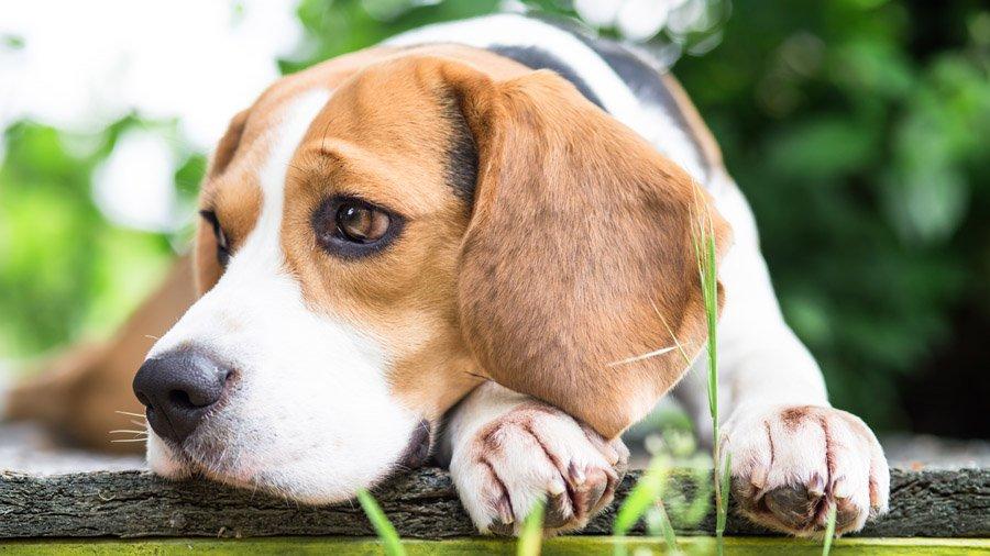 корм для собак при пищевой аллергии