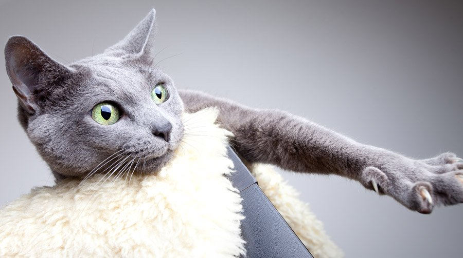 Породы котов отзывы