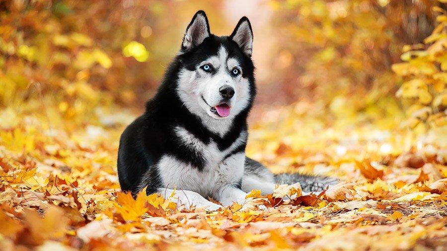 Фото собака осень