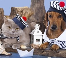 Породы собак с описанием и фото. - Страница 2 1480596964_dachshund-photo-2