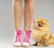 Породы собак с описанием и фото. - Страница 2 1480941168_pomeranian-dog-photo-5