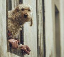 Породы собак с описанием и фото. - Страница 2 1481748473_poodle-dog-photo-7