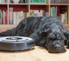 Породы собак с описанием и фото. - Страница 2 1484771909_giant-schnauzer-dog-photo-6