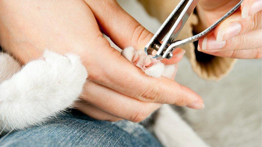 Как подстригать когти коту в домашних условиях 26