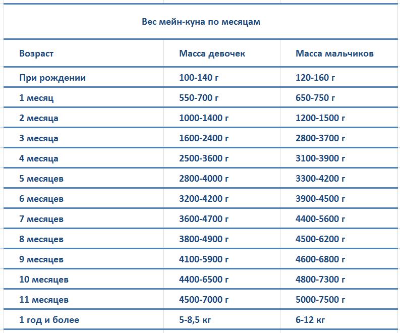Вес мейн-куна по месяцам -  таблица